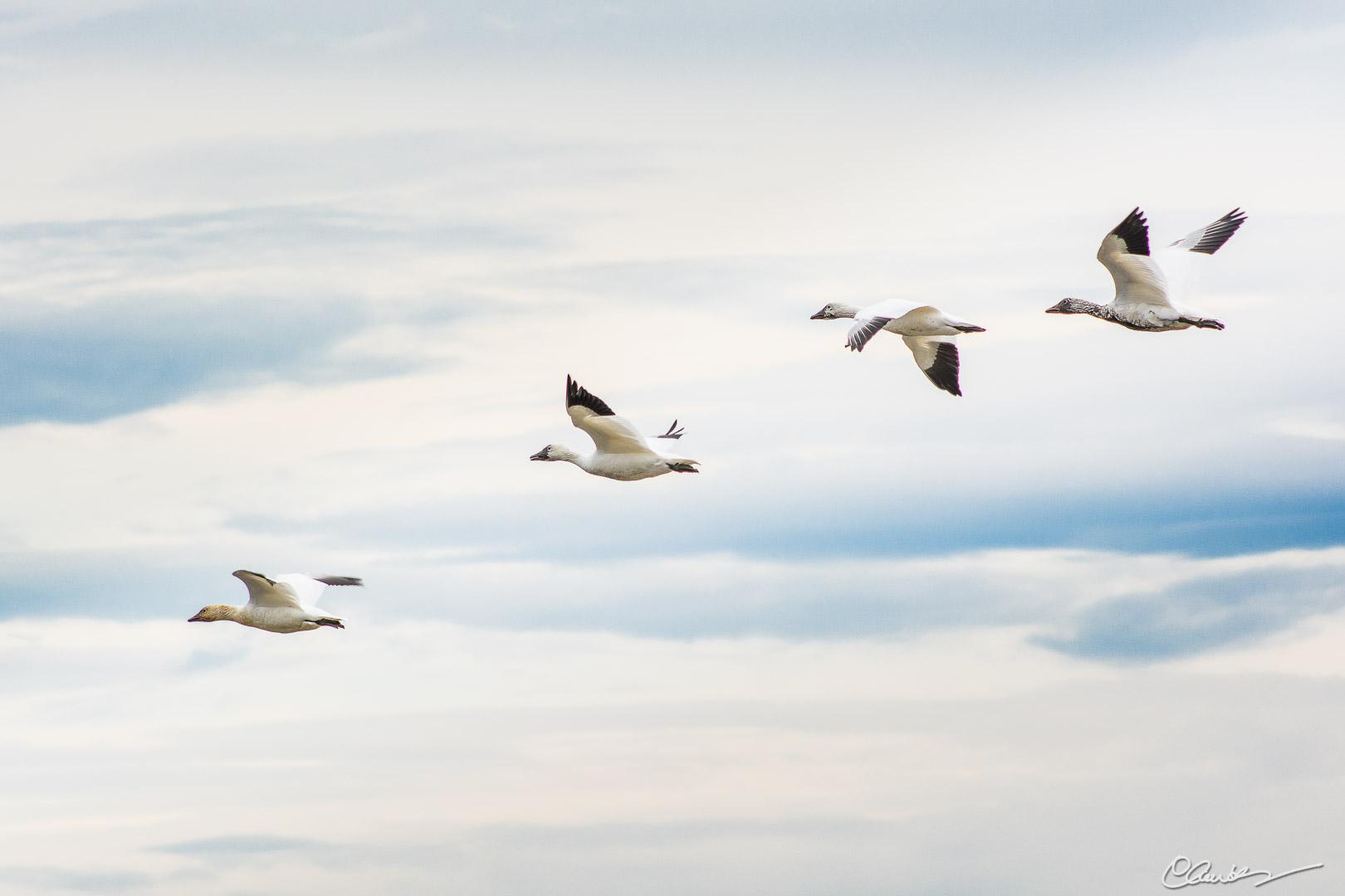 Migration 8