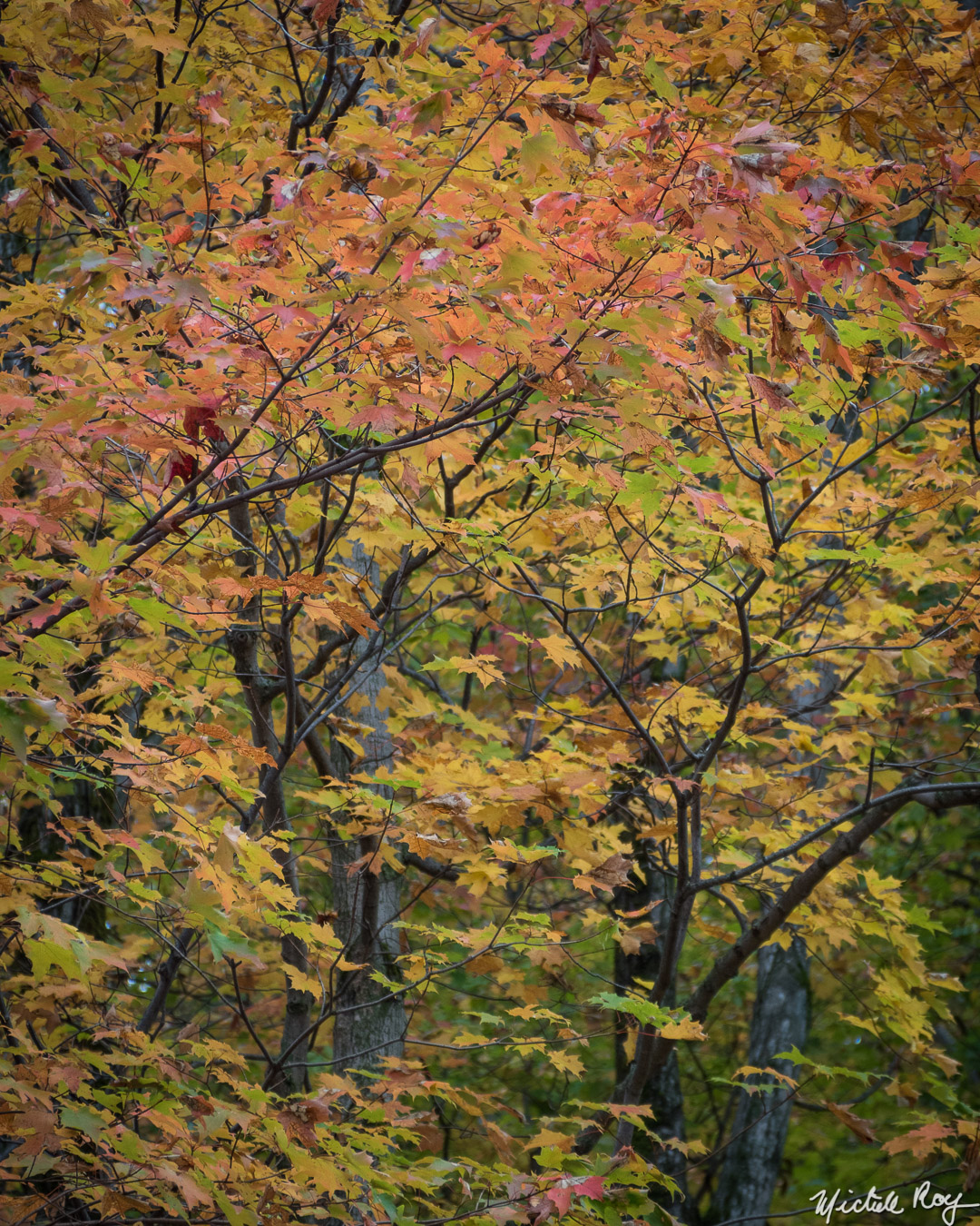 Couleurs automnales (5) / Fall colors (5)