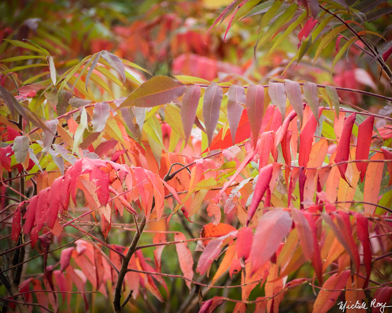 Couleurs automnales (8) / Fall colors (8)