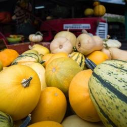 Similkameen Valley : Récoltes d'automne 1
