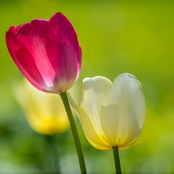 Flore 24