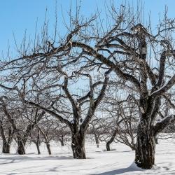 Passage d'hiver 5