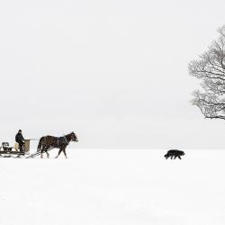 Passage d'hiver 42