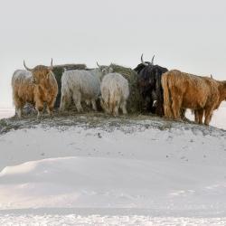 Un hiver à la campagne / CMPQ, 1ère place et mention Honneur, 2013
