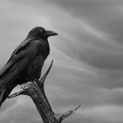 ... sur un arbre perché / Club de Photo Dimension, 1er prix, catégorie Noir et blanc, avril 2015