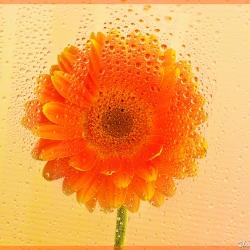 Soleil malgré la pluie / Club de Photo Dimension, 1er prix, catégorie Flore, 2012