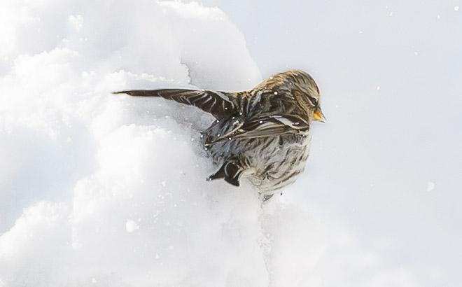 La vie animale en hiver !