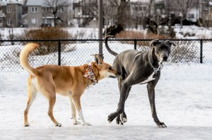 Interactions canines!