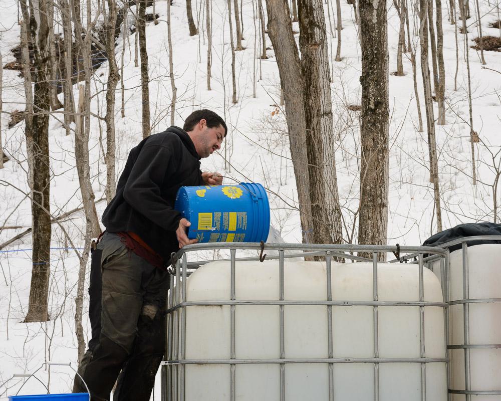 """L""""eau d'érable est transvidée dans un gros contenant."""