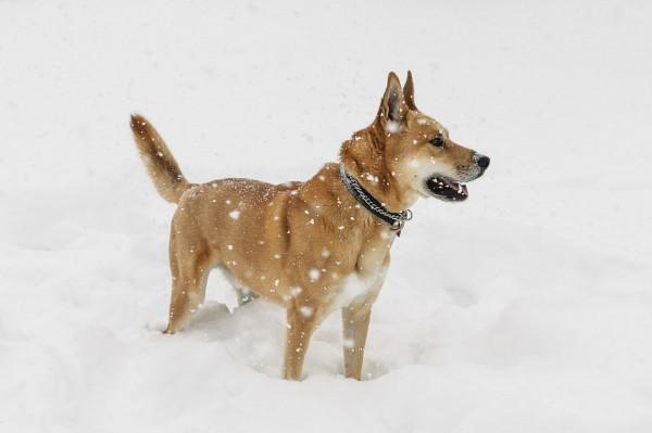 Quand Pedro joue dans la neige!