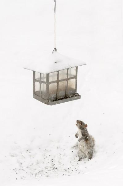 Voici ladite mangeoire et un écureuil intéressé par son contenu.