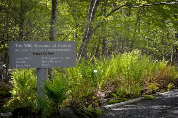 Première escapade photo au Parc National d'Acadia : Fougères
