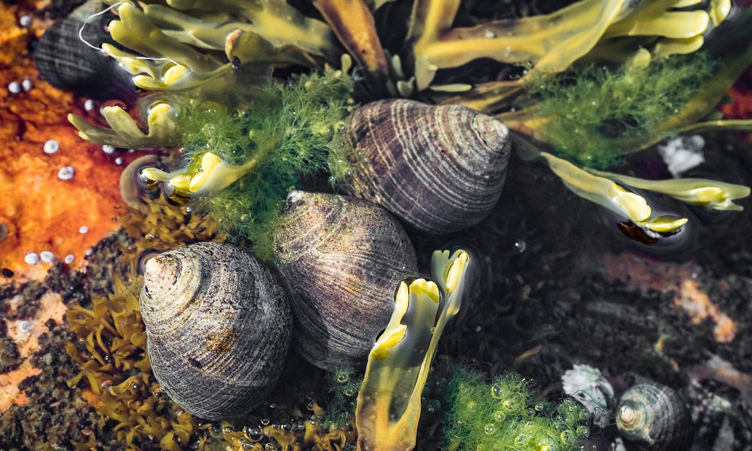 Acadia 2015 la conclusion – Mares intertidales à Ship Harbor / To conclude on Acadia 2015 – Ship Harbor Tide Pools