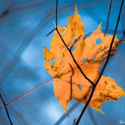 Perpétuer l'automne / Perpetuating autumn