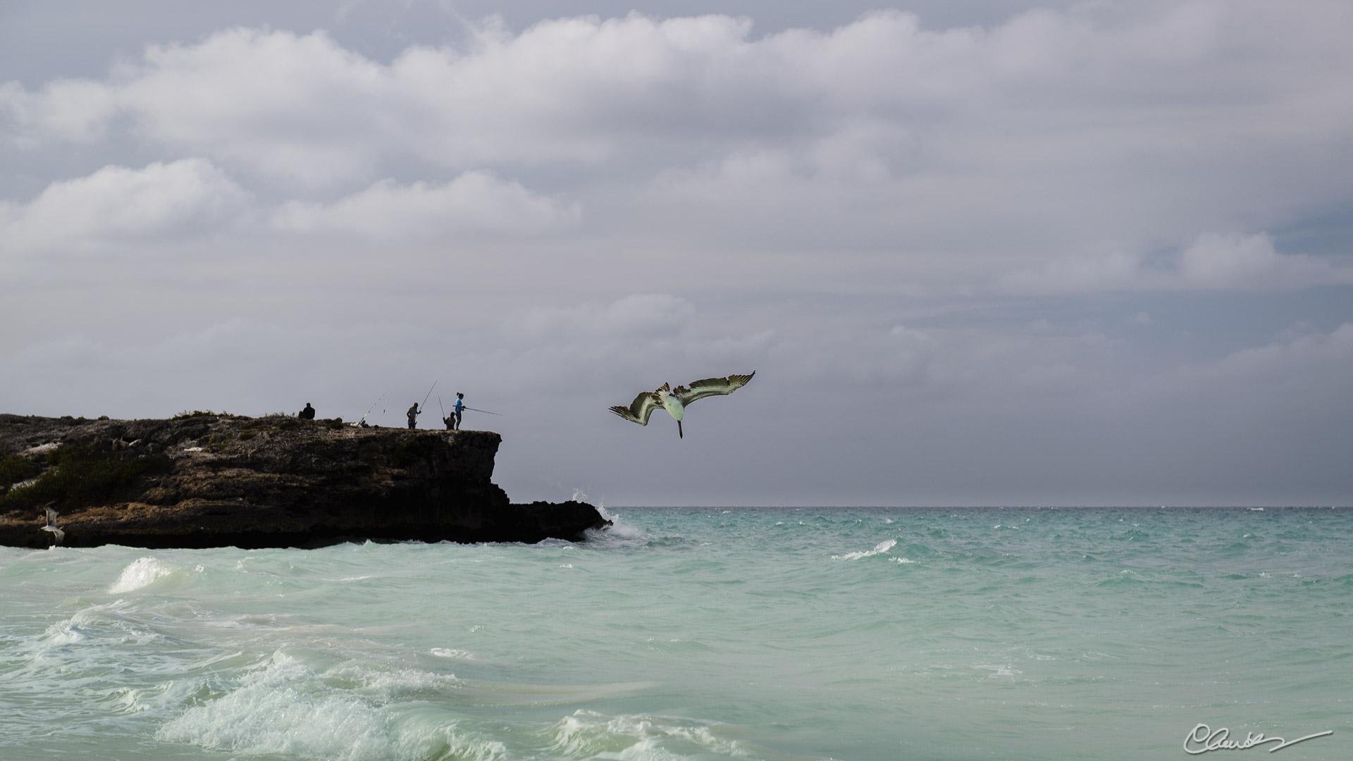 Pêche / Fishing