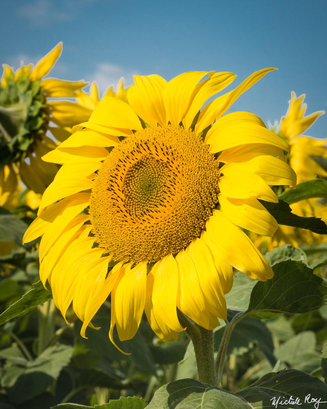 En plein soleil (2) / Facing the sun (2)