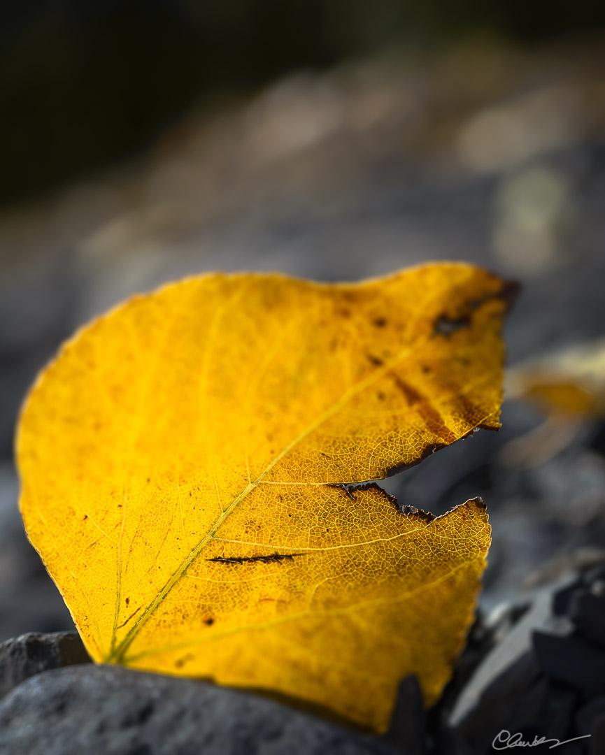 Couleurs automnales (11) / Fall colors (11)
