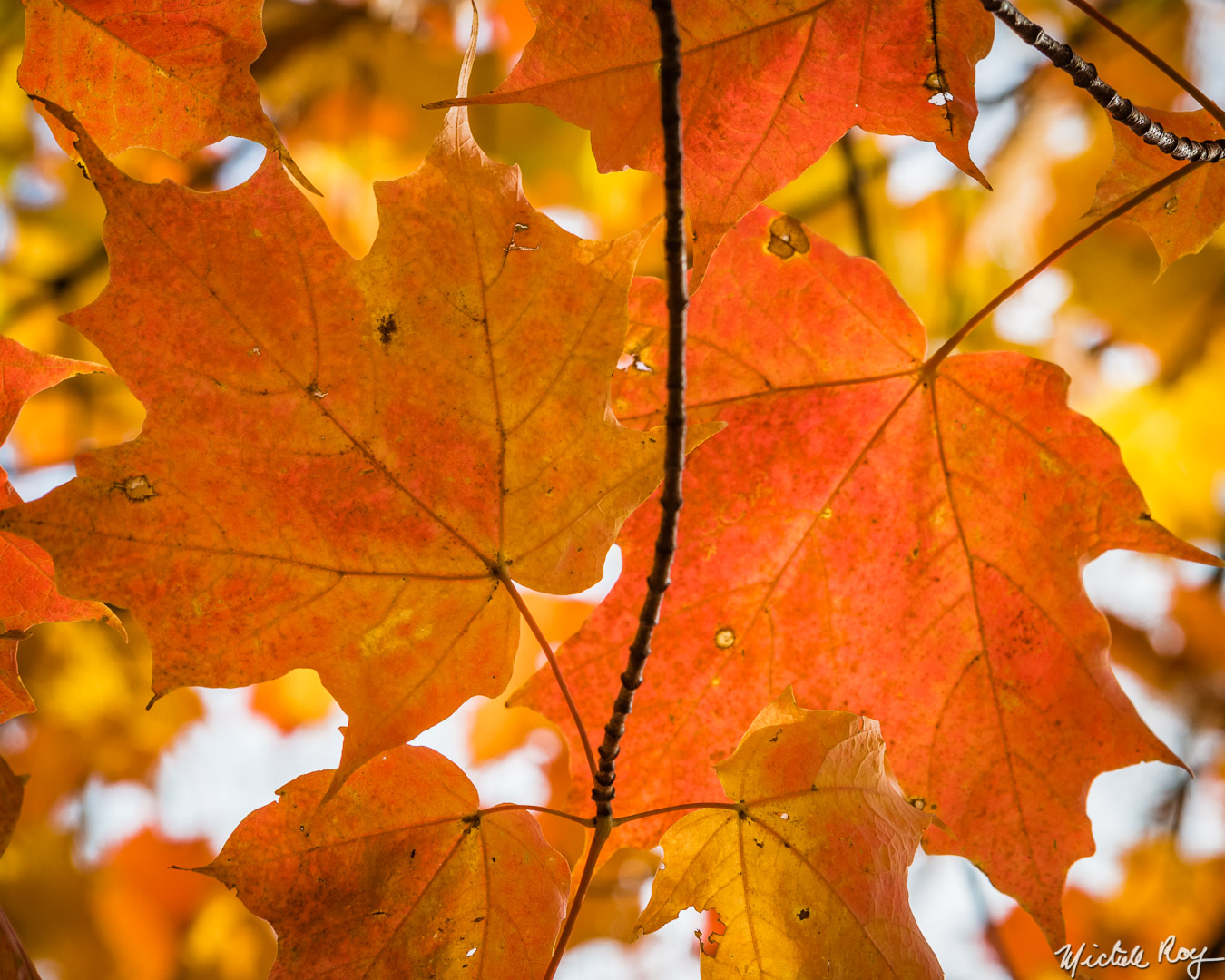 Couleurs automnales (10) / Fall colors (10)