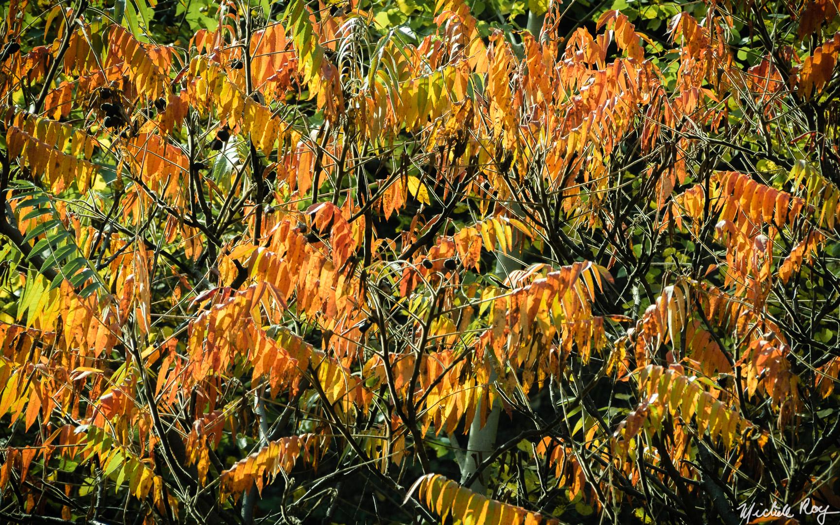 Couleurs automnales (9) / Fall colors (9)