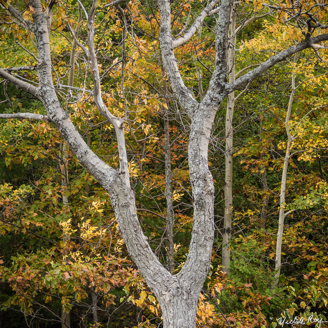 Couleurs automnales (3) / Fall colors (3)