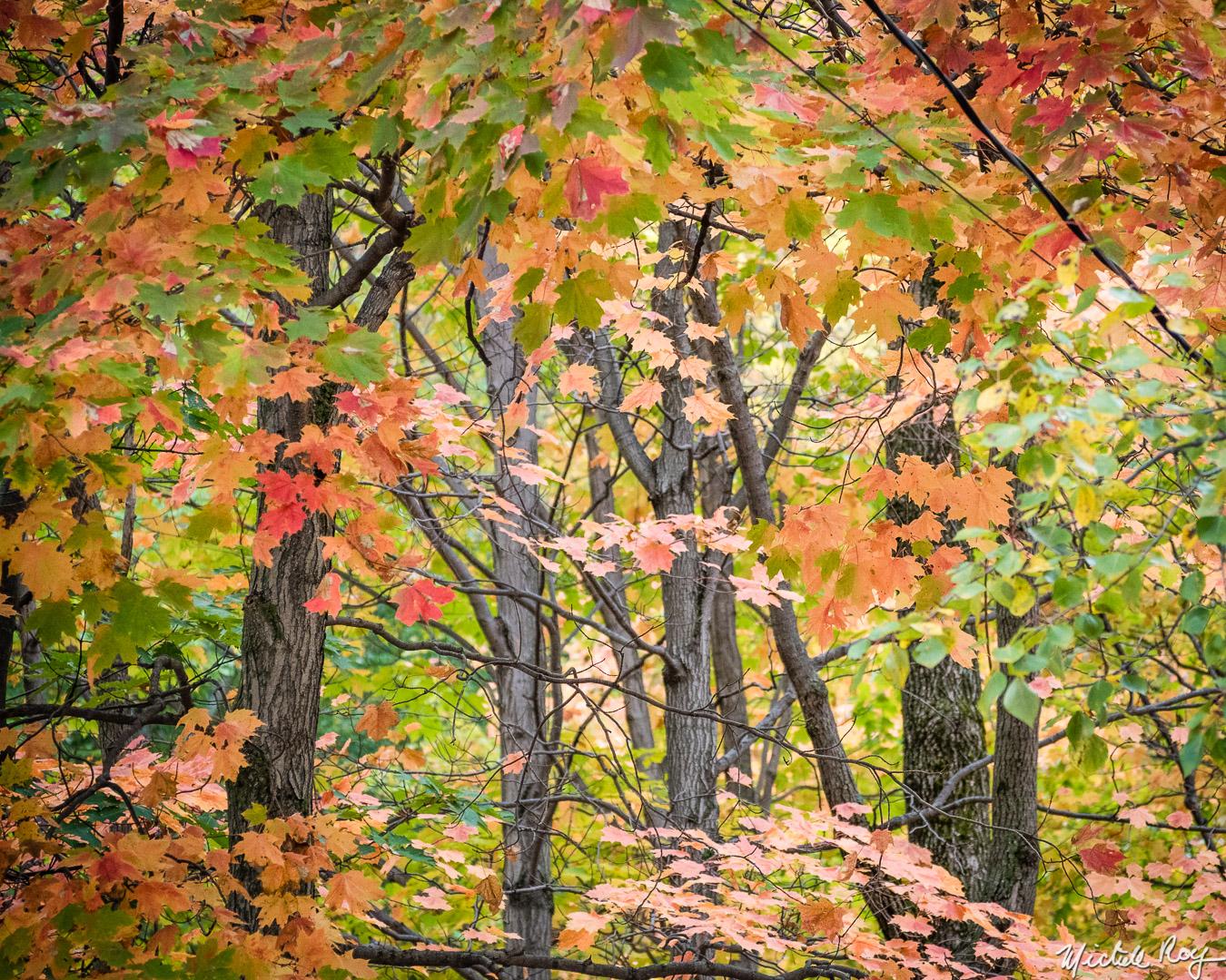 Couleurs automnales (4) / Fall colors (4)