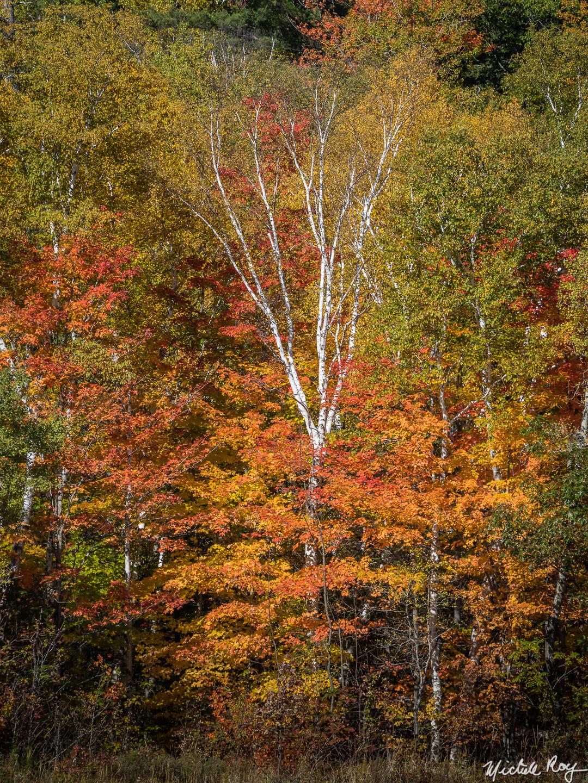 Couleurs d'automne (5) / Fall colors (5)