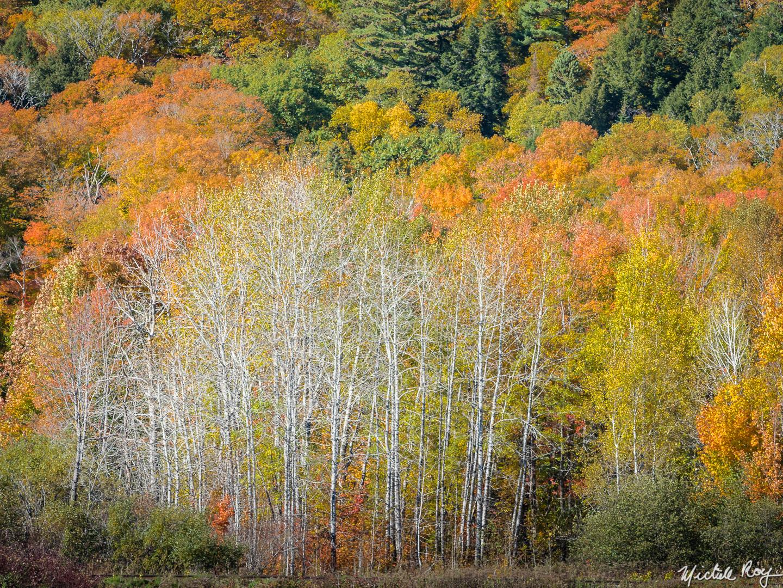 Couleurs d'automne (2) / Fall colors (2)