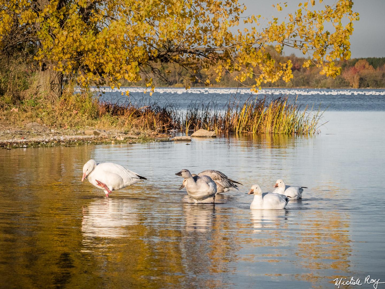 Réservoir Beaudet Reservoir (6)