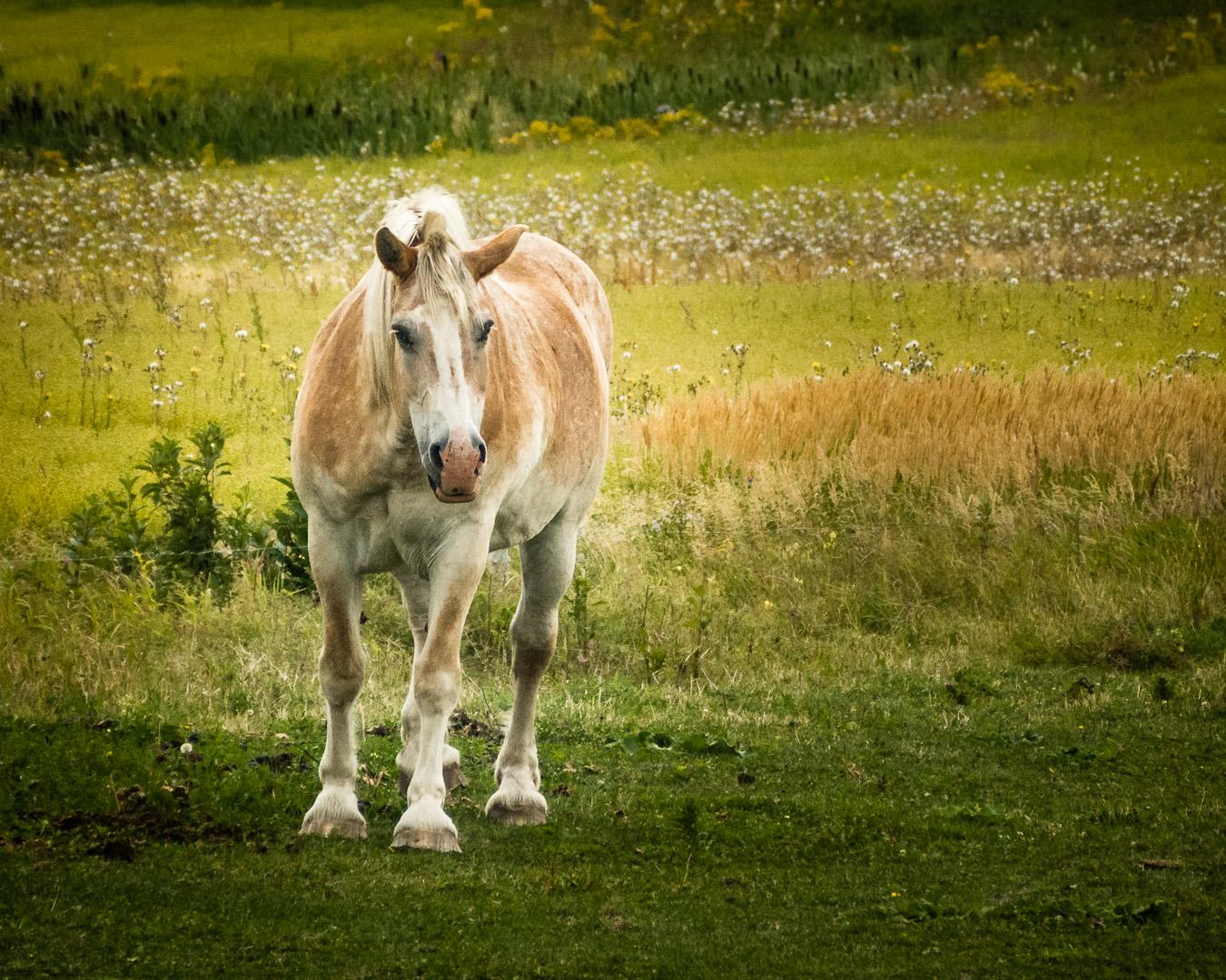 Le bonheur est dans le pré / Happiness is in the meadow
