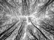 iPhone Paysage/Landscapes 2020 Sélection/Subset - 2