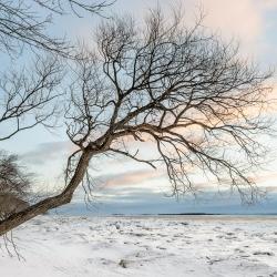 Passage d'hiver 8