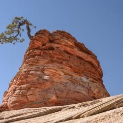 Parc National Zion (Utah) 4
